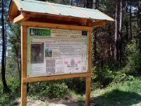 La foresta di Monte Morello. Progetto Europeo FoResMit
